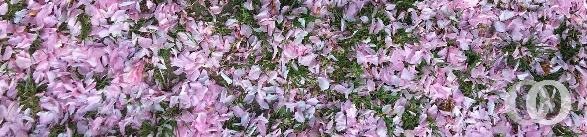 springpetals-banner
